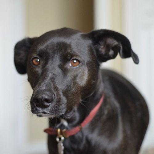 Pet Care Provider Elizabeth M Gallery Image 1