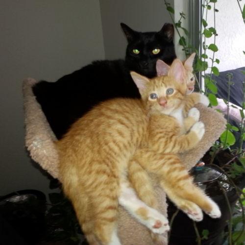 Pet Care Provider Scarlet Maya Gallery Image 1