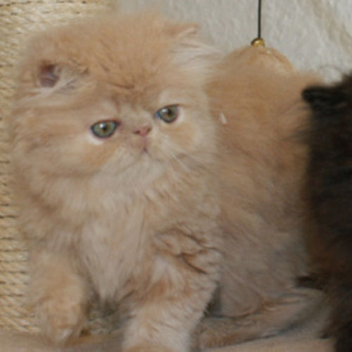 Pet Care Provider Ava Aref Gallery Image 1