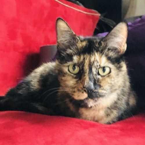 Pet Care Job Danielle M's Profile Picture