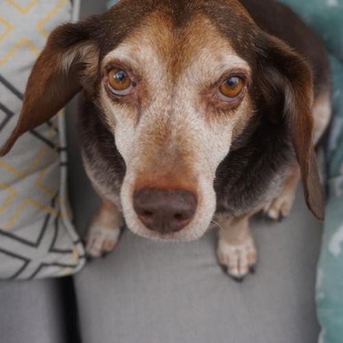 Pet Care Job Kayla M's Profile Picture