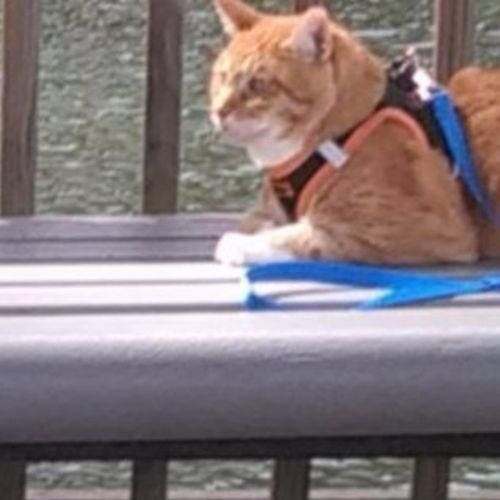 Employing Crestview, Florida Cat Sitting Professional
