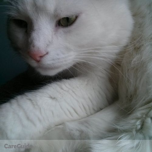 Pet Care Provider Sarah Demers's Profile Picture
