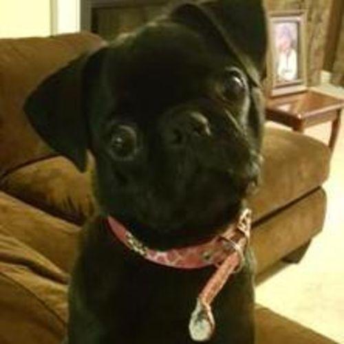 Pet Care Provider Bonita Bryant's Profile Picture