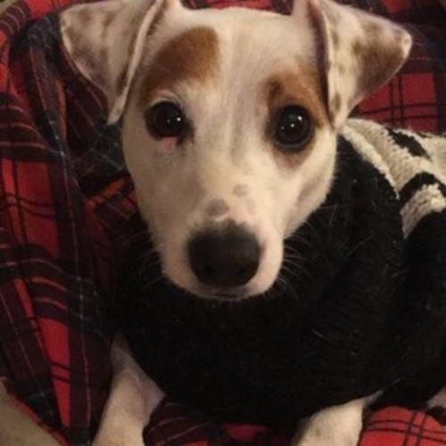 Pet Care Job Dan Pavelka's Profile Picture