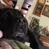Oak Harbor Pet Groomer Seeking Being Hired in Washington
