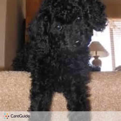 Pet Care Job Nicole Carter's Profile Picture