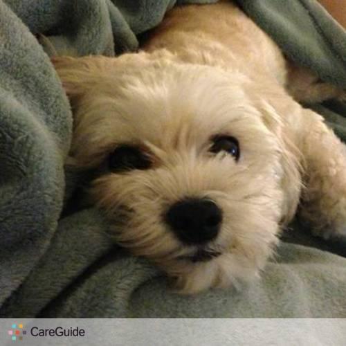 Pet Care Provider Amy Tan's Profile Picture