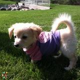 Lulu needs Love from U !:)