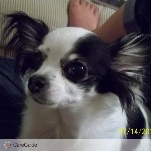 Pet Care Provider Priscilla Wardle's Profile Picture