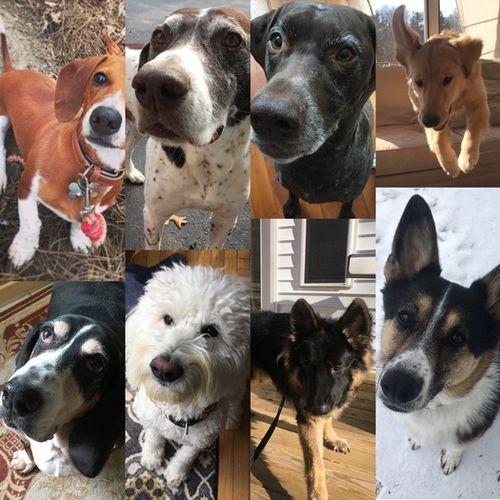 Pet Care Provider Laura M Gallery Image 2