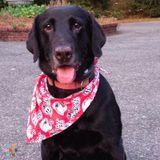 Dog Walker, Pet Sitter in Portland
