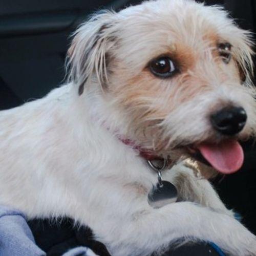 Pet Care Provider Jocelyn C Gallery Image 1