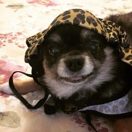 Pet Care Provider Sandra P's Profile Picture