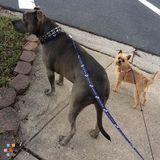 Dog Walker, Pet Sitter in Delmar