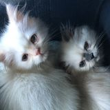 Stop by visit for two lovely kittens