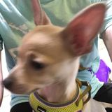 Aurora Dog Walker /Dog handler Interviewing For Job Opportunities