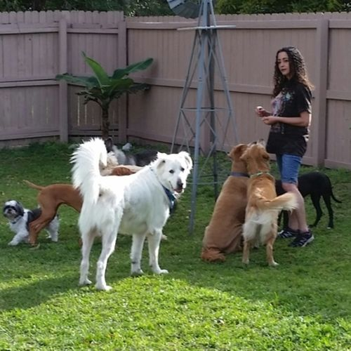 Pet Care Provider Taimi R Gallery Image 3