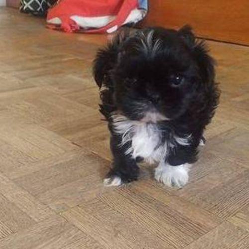 Pet Care Provider Teddy O's Profile Picture