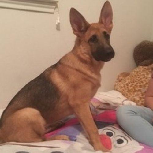 Pet Care Provider Christine M's Profile Picture