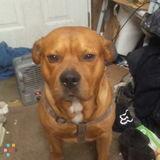 Dog Walker Job, Pet Sitter Job in Salem