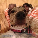 Dog Walker Job, Pet Sitter Job in Bath