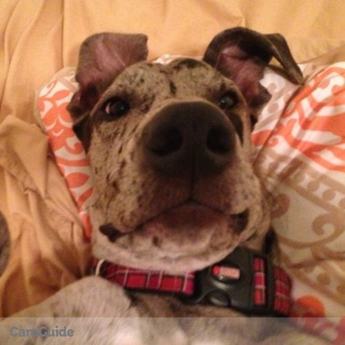 Pet Care Job Phoenix Teagarden's Profile Picture