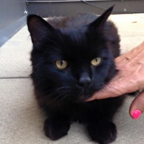 Pet Care Provider Happy At Home Petsitters Toronto C Gallery Image 1