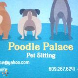 Dog Walker, Pet Sitter in Marlton