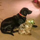 Capable Pet Helper for Your Home