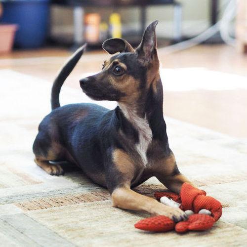 Pet Care Job Alice Z's Profile Picture