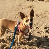 Ewa Beach Dog Sitter Seeking Work