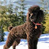 We are experts at caring for all kinds of dog, Coquitlam, British Columbia Pet Sitting Professional