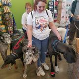 Cuyahoga Falls Dog Sitter Looking For Work