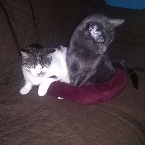archived looking for help with two paraplegic cats on an as needed basis pet sitter job in bradford west gwillimbury on petsitter com