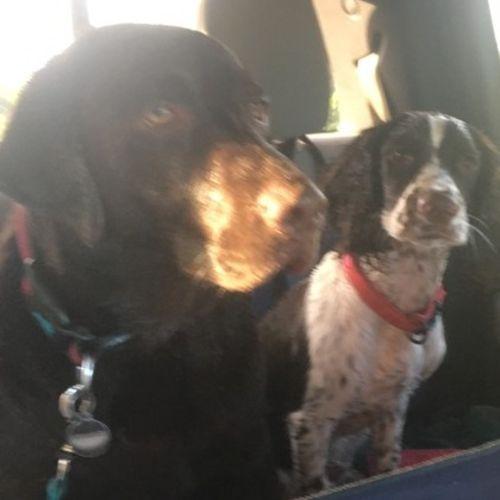 Pet Care Provider Linda Essiembre's Profile Picture