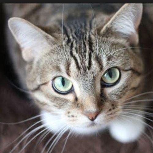 Pet Care Provider Zack D's Profile Picture