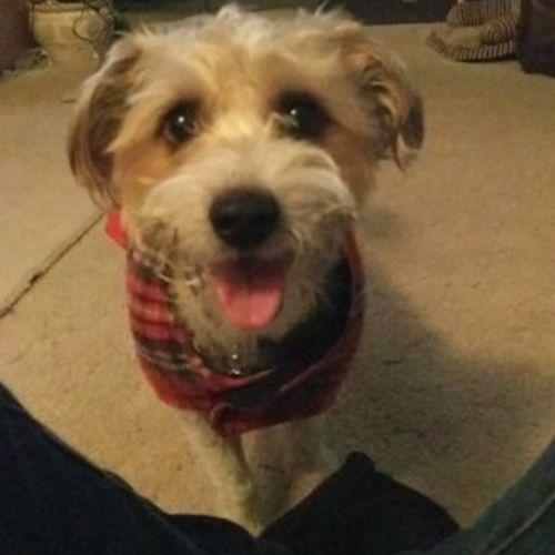 Pet Care Provider Samantha Pye Gallery Image 3