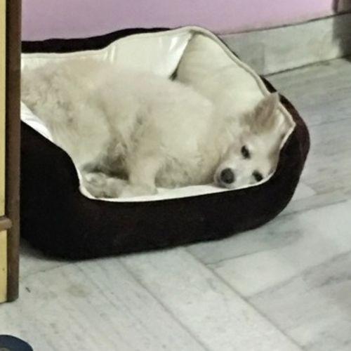 Pet Care Provider Shruti. C Gallery Image 3