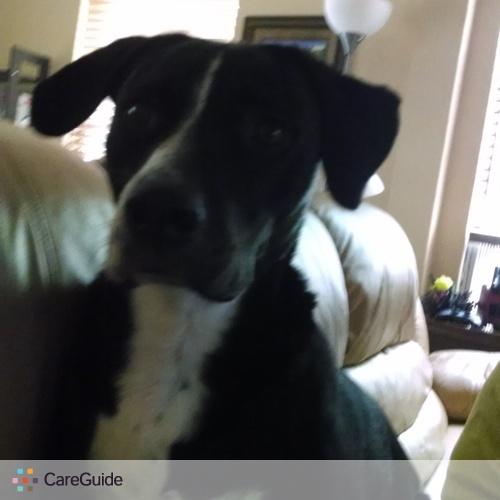 Pet Care Provider Tiffany Lee's Profile Picture