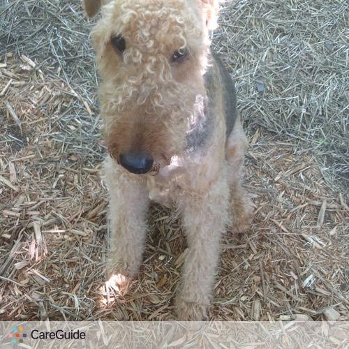 Pet Care Provider Judy McGinnis's Profile Picture