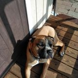 For Hire: Careful Dog Walker in Jamestown, New York