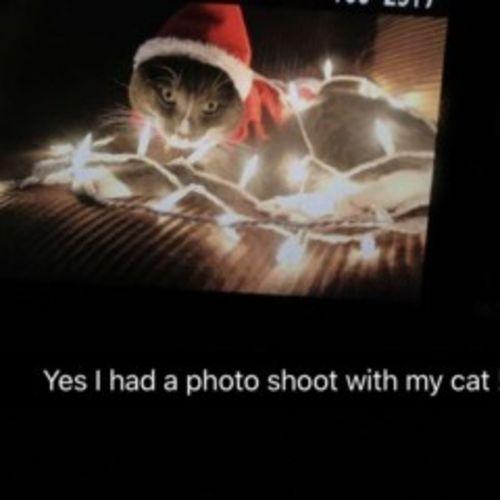 pet care provider stephanie p gallery image 1