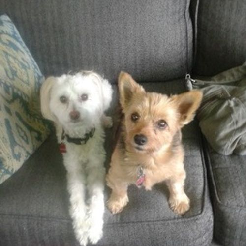 Pet Care Provider Krissy H Gallery Image 2