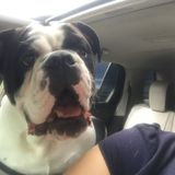 Houston Pet Carer Seeking Job Opportunities