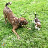 Dog Walker, Pet Sitter in Nyack