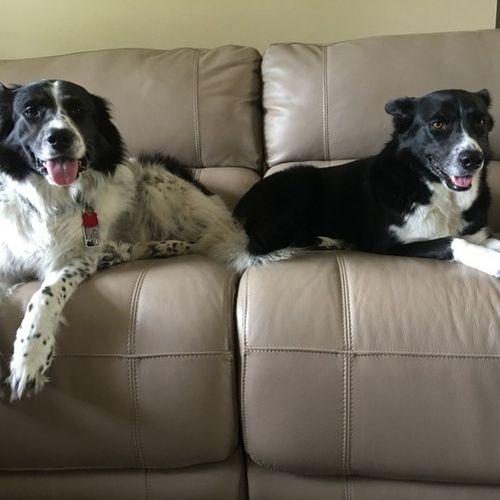 Pet Care Provider Trish Scott Gallery Image 3