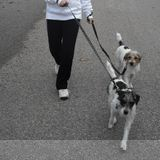 Dog Walker, Pet Sitter in Richmond Hill