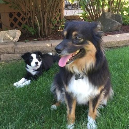 Pet Care Provider Carlie P Gallery Image 1