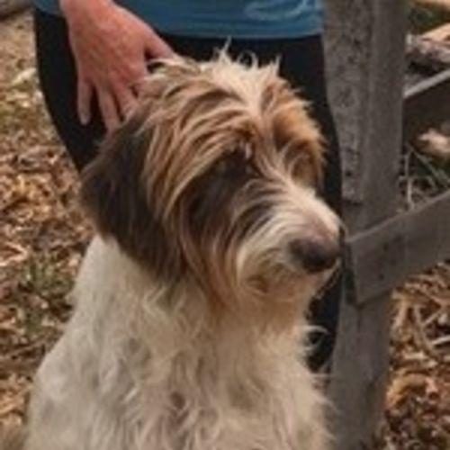 Pet Care Job Val M's Profile Picture
